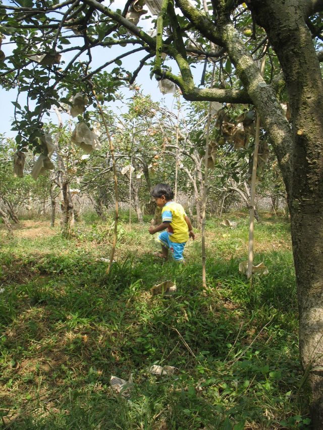 haidar menjelajah kebun apel